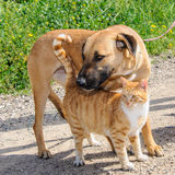 Vrienden - bruine hond en gemberkat samen Stock Fotografie