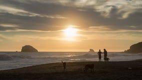 Vrienden en honden bij het strand tijdens de zonsondergang royalty-vrije stock afbeeldingen