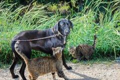 Vrienden - hond en twee katten samen Stock Afbeeldingen