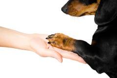 Vriendschap tussen mens en hond stock afbeelding