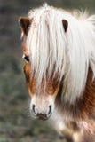 Blonde poney Royalty-vrije Stock Afbeeldingen