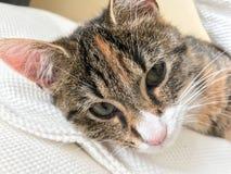 Vriendschappelijk hello van een klein katje royalty-vrije stock foto