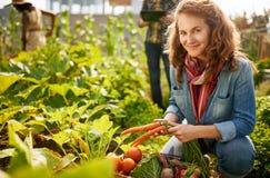 Vriendschappelijk team die verse groenten van de tuin van de dakserre oogsten en oogstseizoen op digitaal plannen royalty-vrije stock afbeelding