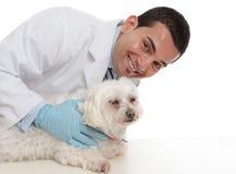 Vriendschappelijke gevende dierenarts met een ziek dier royalty-vrije stock afbeelding