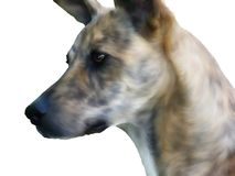 Vriendschappelijke hond Royalty-vrije Stock Afbeelding