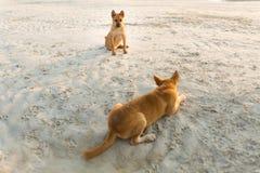 Vriendschappelijke honden op Koh Larn Royalty-vrije Stock Afbeeldingen