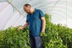Vriendschappelijke landbouwer die verse groenten van het dak oogsten gre Stock Fotografie