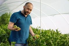 Vriendschappelijke landbouwer die verse groenten van het dak oogsten gre Stock Foto