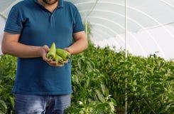 Vriendschappelijke landbouwer die verse groenten van het dak oogsten gre Royalty-vrije Stock Foto's