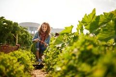 Vriendschappelijke vrouw die verse groenten van de tuin van de dakserre oogsten royalty-vrije stock afbeeldingen
