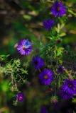 vriendschapsvlinders en bijen:) Stock Foto