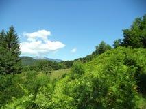 Vrij aardig landschap Stock Fotografie