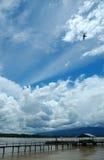Vrij als vogel stock afbeeldingen