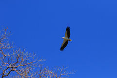 Vrij als vogel Stock Foto's