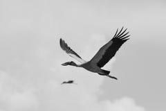 Vrij als vogel stock fotografie