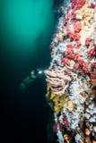 Vrij duiken in Brits Colombia Stock Foto's