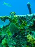 Vrij duiken in de sleutels van Florida royalty-vrije stock afbeeldingen
