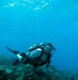Vrij duiken in de sleutels van Florida Stock Foto