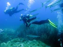 Duikers en barracuda's Royalty-vrije Stock Foto