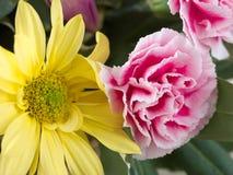 Vrij geel madeliefje en roze anjer in natuurlijk aangestoken bloemstuk stock fotografie