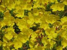 Vrij gele bloemen Stock Foto