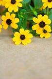 Vrij gele bloemen op jute Royalty-vrije Stock Foto