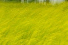 Vrij hand Abstract het Schieten Raapzaadgebied in Jeju, Zuid-Korea Stock Afbeeldingen