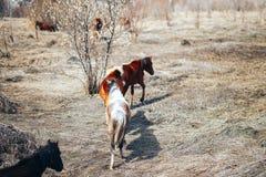 Vrij jong die paard twee op de lentegebied, rood en zwarte in werking wordt gesteld stock foto