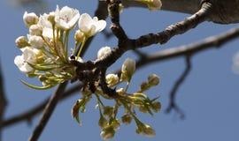 Vrij kleine bloemen Royalty-vrije Stock Foto