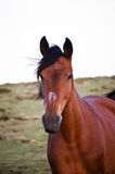 Vrij lopen van het paard Royalty-vrije Stock Foto's