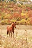 Vrij paard Royalty-vrije Stock Foto
