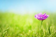 Vrij Roze bloem Royalty-vrije Stock Foto