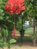 Vrij Roze bloem royalty-vrije stock afbeelding