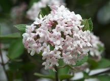 Vrij Roze Bloemen Royalty-vrije Stock Foto
