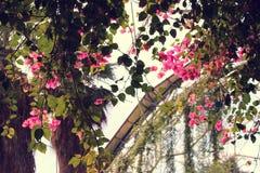 Vrij Roze Wilde Hangende Bloemen Royalty-vrije Stock Afbeeldingen