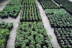 Vrij sierplanten die in bloempotten in een broeikas bij een kinderdagverblijf of landbouwbedrijf voor kleinhandels als huis of tu royalty-vrije stock fotografie