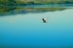 Vrij-vluchtvogels Stock Afbeeldingen
