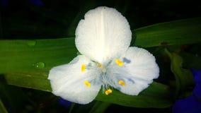 Vrij witte bloem Royalty-vrije Stock Afbeeldingen