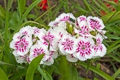 Vrij witte en rode bloemen royalty-vrije stock fotografie