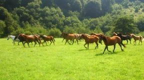 Vrije paarden Royalty-vrije Stock Afbeeldingen