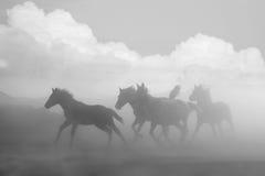Vrije paarden die de aard in werking stellen Stock Foto's