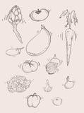 Vrije stijlhand die plantaardige reeks trekken Royalty-vrije Illustratie