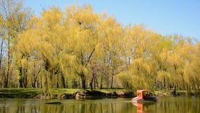 Vrije tijd in stadspark - het enige boot berijden langs de vijver in de lente stock videobeelden