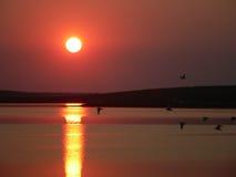 Vrije vogels op de zonsondergang Royalty-vrije Stock Afbeeldingen