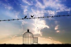 Vrije vogels op draad Stock Foto
