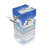 Vrijheid in een doos. Stock Afbeeldingen