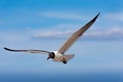 Vrijheidsvogel Stock Afbeeldingen