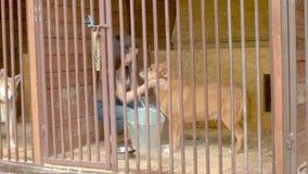 Vrijwilliger in de kooi van een hond stock videobeelden
