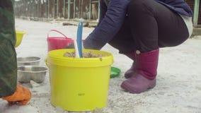 Vrijwilligers die voedsel zetten aan honden in een hondschuilplaats stock videobeelden