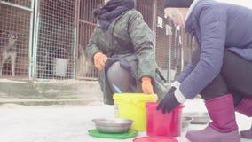 Vrijwilligers die voedsel zetten aan honden in een hondschuilplaats stock footage